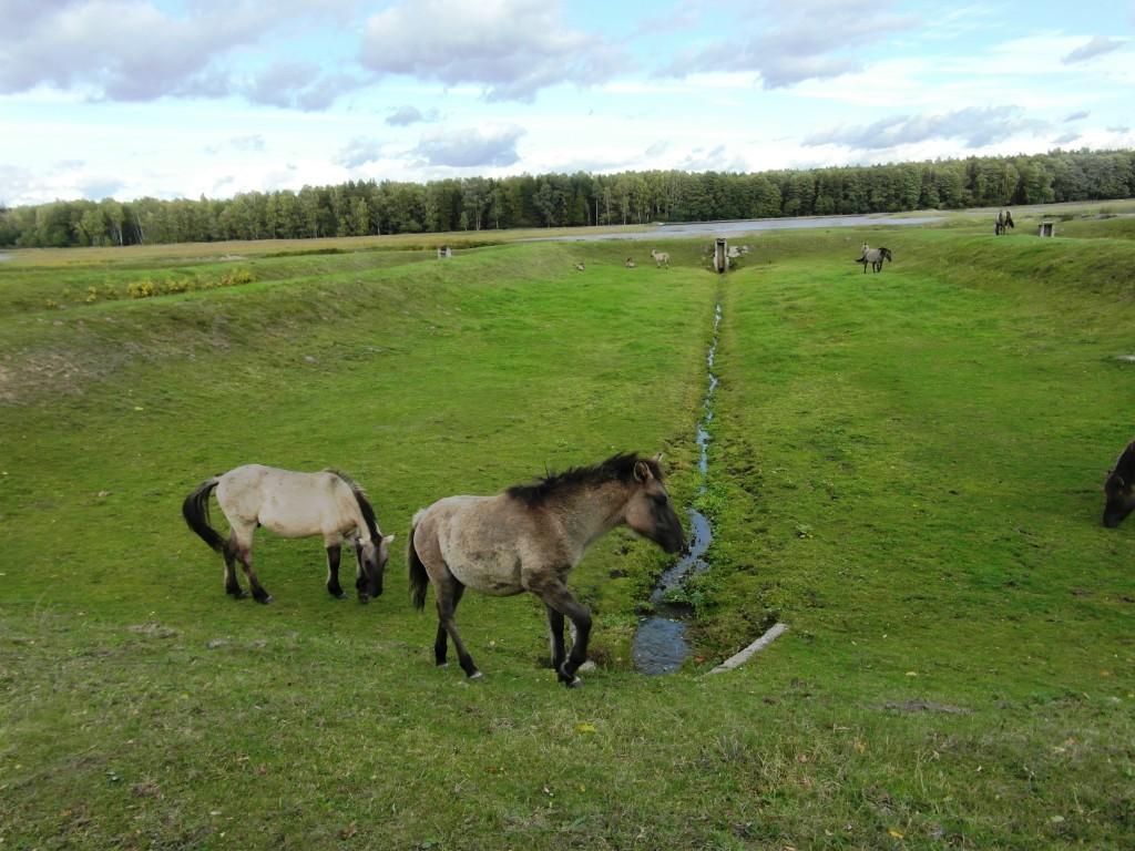 konie z bliska ok