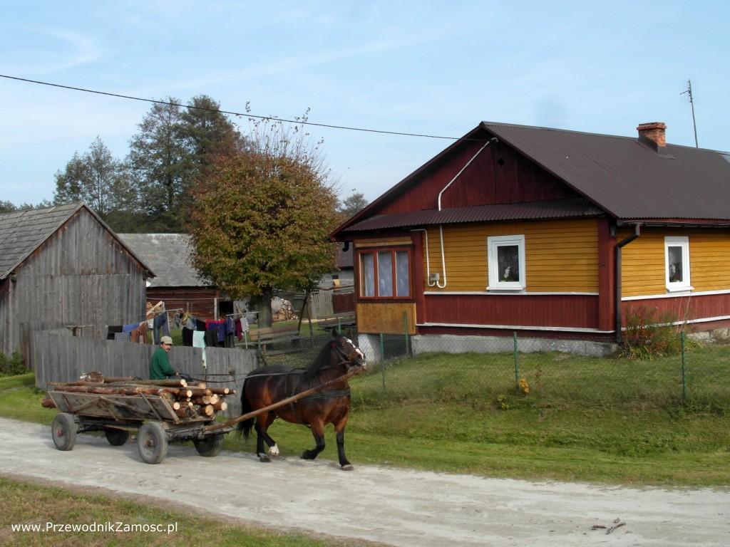 fura koń z drzewem bond