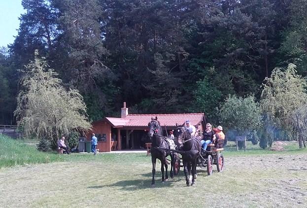bryczka czarne konie1